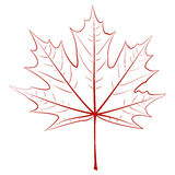 Graphic Maple Leaf Stock Images
