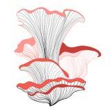 Graphic mushrooms Stock Photos