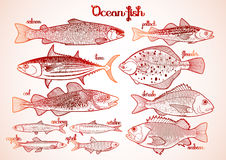Graphic ocean fish collection Stock Photography