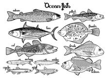 Graphic ocean fish collection Stock Photos