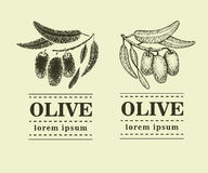 Graphic olive branch. Hand drawn logo template. Vector illustration used for advertising natural olive products. vintage Royalty Free Stock Images