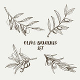 Graphic olive branches set. Vector illustration. Stock Photo