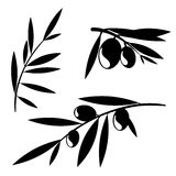 Graphic olive tree branches Royalty Free Stock Photography