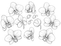 Graphic orchid Royalty Free Stock Photography