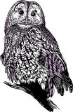 Graphic Owl Stock Images