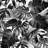 Graphic palm leaves seamless background. Graphic plant palm leaf tropic. Print black and white background style, exotic floral jungle. Trendy seamless vector Stock Photos