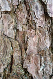 Graphic pattern. From the bark of a tree Royalty Free Stock Image