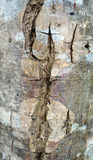 Graphic pattern. From the bark of a tree Royalty Free Stock Images