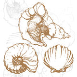 Graphic pencil vector skethes with shells illustra Stock Photos