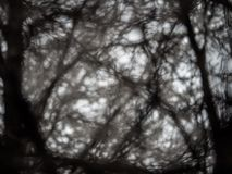 A graphic photograph of a mysterious Sepia tone out of focus with contrast bokeh