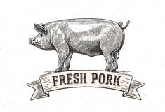 Graphic pig. Vector illustration drawn, by hand. Vector can be used as labels and packaging Royalty Free Stock Photo