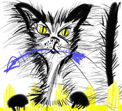 Graphic portrait stray cat Stock Photo