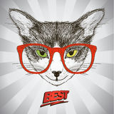 Graphic poster with hipster cat dressed in red glasses, against pop-art background with rays Stock Photo