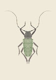 Graphic print of titan beetle. Stock Photography