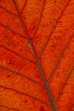 Graphic Resources . Leaf background. Royalty Free Stock Photo