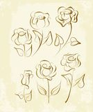 A set of rose drawn in pen and ink. stock illustration