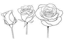 Graphic roses set 01 Royalty Free Stock Photos