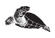 Graphic sea turtle, vector Stock Images
