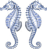 Graphic Seahorse. Seahorse bay - autor's graphic summer design element with seahorse Stock Photo