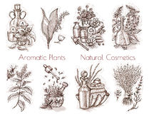 Graphic set with aromatic plants, flowers and natural cosmetic ingredients isolated on white Stock Images