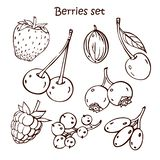 Graphic set with different berries. royalty free illustration