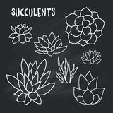 Graphic Set of succulents  on chalk board for design of cards, invitations Royalty Free Stock Images