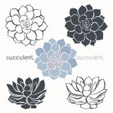 Graphic set with succulents  isolated on white background. Hand Royalty Free Stock Photo