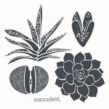 Graphic set with succulents  isolated on white background. Hand Stock Images