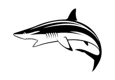 Graphic shark, vector. Graphic shark on white background stock illustration