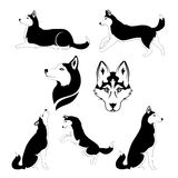Graphic silhouette of a dog of breed siberian. Husky icons and silhouettes. Set of graphic illustrations in different poses Stock Photo