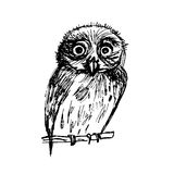 Graphic sketch bird owl  illustration Royalty Free Stock Photography