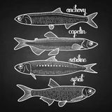 Graphic small  fish collection. Drawn in line art style. Anchovy, capelin, sardine and sprat for seafood menu. Sea and ocean creatures isolated on chalkboard Stock Photos