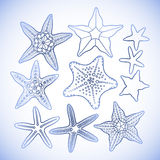 Graphic starfish collection Royalty Free Stock Photo