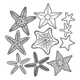 Graphic starfish collection Stock Photo