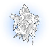 Graphic telescope fish. Graphic couple of telescope fishdrawn in line art style. Vector freshwater creature isolated on white background. T-shirt print, tattoo Stock Image
