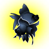 Graphic telescope fish. Graphic couple of telescope fish isolated on bright yellow background. Vector freshwater creature. T-shirt print or tattoo design Royalty Free Stock Photography