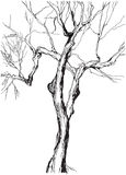 Graphic tree Stock Photos
