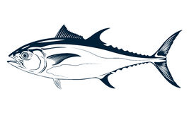 Graphic tuna, vector Royalty Free Stock Photography