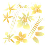 Graphic vanilla flowers. Collection isolated on white background. Vector floral design elements Stock Image