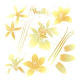 Graphic vanilla flowers Stock Image