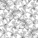 Graphic vanilla pattern Stock Image
