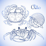 Graphic vector crab collection Royalty Free Stock Image