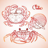 Graphic vector crab collection Royalty Free Stock Photo