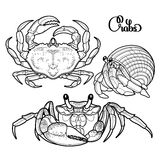 Graphic vector crab collection Royalty Free Stock Images