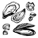 Graphic vector mussels, oysters and mollusk drawn in sketch style. Royalty Free Stock Photography