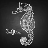 Graphic vector Seahorse Stock Image