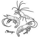 Graphic vector shrimps collection Royalty Free Stock Photo