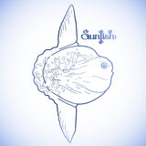 Graphic vector sunfish Royalty Free Stock Photography