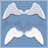 Graphic wings. Front and rear side. Stock Photo