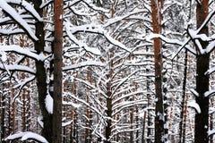 Graphic winter landscape Stock Photos